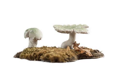 Odjeljenje za prirodne nauke, botanika, gljive, Macromycetes, golubača