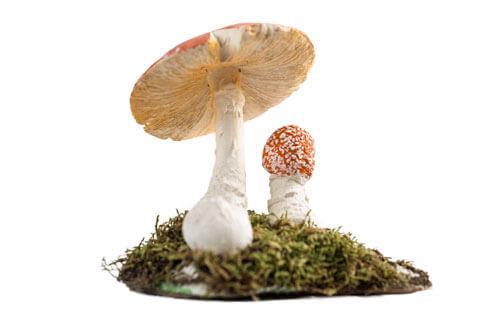 Odjeljenje za prirodne nauke, botanika, gljive, Macromycetes, muhara, Amanitara muscaria