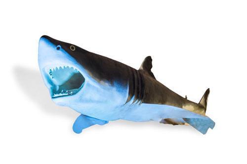 Odjeljenje za prirodne nauke, zoologija, ribe, ajkula, morski pas, velika bijela psina