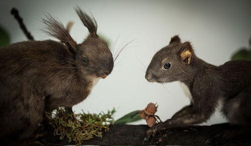 Odjeljenje za prirodne nauke, zoologija, životne zajednice, diorama