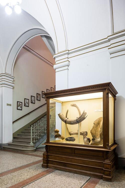 Odjeljenje za prirodne nauke, geologija, geološka prošlost, fosil, pleistocen, kosti, mamut, bizon, los